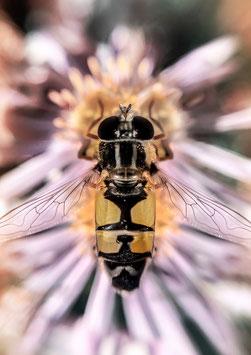 Bee Lover by Ole Bielfeldt