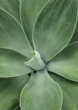 Cactus Flower by Nora Brumm