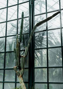 Einzel-Postkarte 'Cactus Glass'
