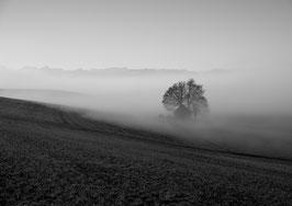 Tree Alone by Muriel Baeriswyl
