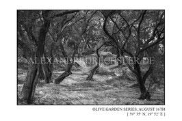 Olive Garden Series