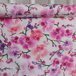 Orchideen, violett und pink