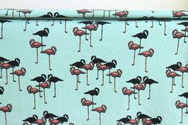 Flamingos, mint