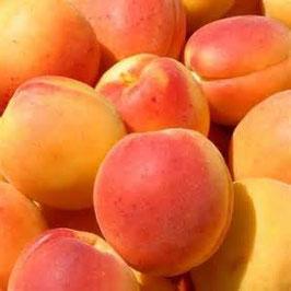 Abricots Bergeron 5 kg