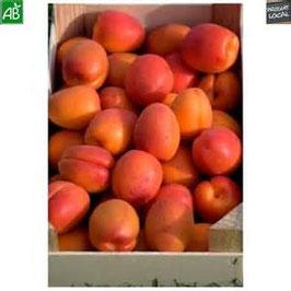 Abricots Orangered 5 kg