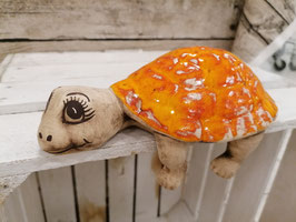Regalschildkröte