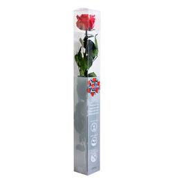 Infinity Rose 55 cm - eine echte, konservierte Rose, die nicht verblüht.