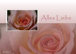 rose alles liebe