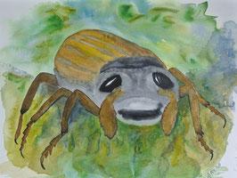 Maikäfer, Aquarell, 36x51 cm