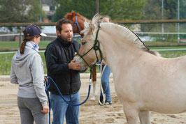 2 Tages Kurs - Preis pro Person mit Pferd (buchbar in W, NÖ, BGLD, STMK)