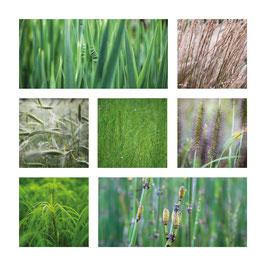 Grusskarte Gräser