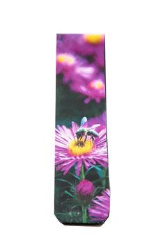 pinke Herbstaster