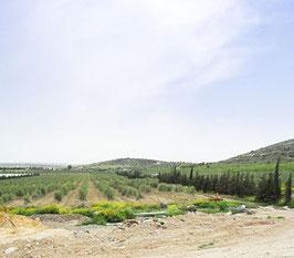 チュニジア産エキストラバージンオリーブオイル