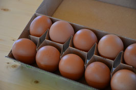 Freiland Eier 10 Stk.