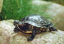Pack de plantas para tortugas