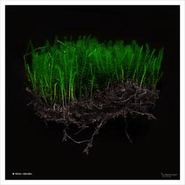 Foto-Kunstserie »Bolle-Landart«