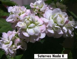 Пеларгония розоцветная Sutarve Nada K