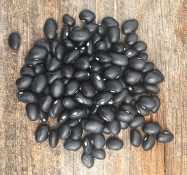 Black Turtle - Organic