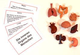 NEUAUFLAGE: Die Organe des Menschen - BM 232