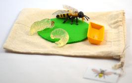 BM405: DIY-Kit Lebenszyklus Honigbiene