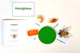 Lebenszyklus Biene: Ein Bienenspiel - BM 117