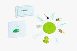 Lebenszyklus Frosch: Ein Froschspiel - BM 110