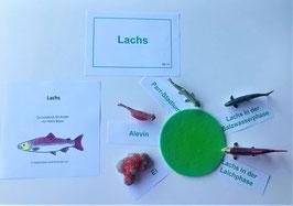 BM115: Lebenszyklus Lachs