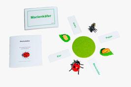 Lebenszyklus Marienkäfer: Ein Marienkäferspiel - BM 113