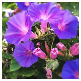 """Pflanzen & Natur """"Square""""-008"""