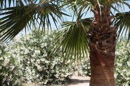 """Pflanzen & Natur """"Classic""""-006"""