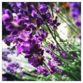 """Pflanzen & Natur """"Square""""-004"""