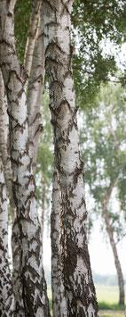 "Pflanzen & Natur ""Xtra""-001"