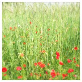 """Pflanzen & Natur """"Square""""-001"""