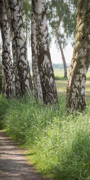 "Pflanzen & Natur ""Large""-012"