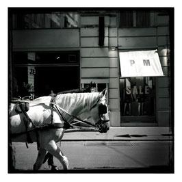 Wien im Quadrat S/W 1
