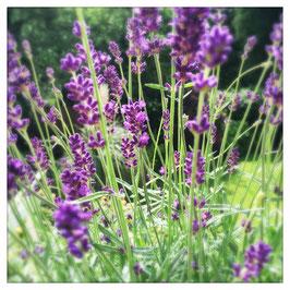 """Pflanzen & Natur """"Square""""-005"""