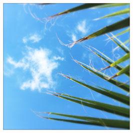 """Pflanzen & Natur """"Square""""-009"""
