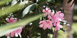 "Pflanzen & Natur ""Large""-005"