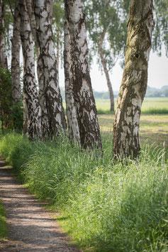 """Pflanzen & Natur """"Classic""""-010"""