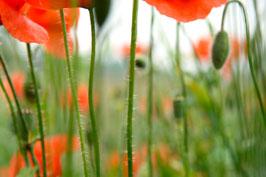 """Pflanzen & Natur """"Classic""""-004"""
