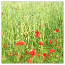 """Pflanzen & Natur """"Square""""-002"""