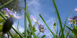 "Pflanzen & Natur ""Large""-010"