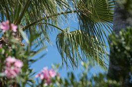"""Pflanzen & Natur """"Classic""""-005"""