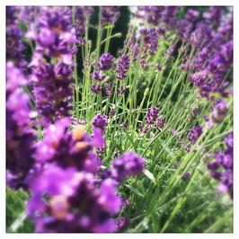 """Pflanzen & Natur """"Square""""-006"""