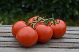 Tomaten (Strauchtomate, Rispentomate, Cocktailtomate)