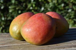 Mango (1 Stk.)