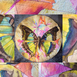 The Butterfly, 2018