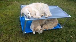 Lit  Superposé pour chien de taille Xsmall  680 mm  x 480 mm  H 450 mm ( hauteur modifiable)
