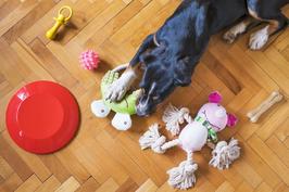 Hundespielzeug basteln für Kinder