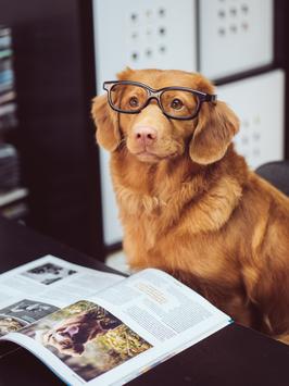 Hündisch lernen - der Kurs um Deinen Hund besser zu verstehen  ONLINE